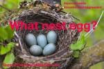 nest special needs